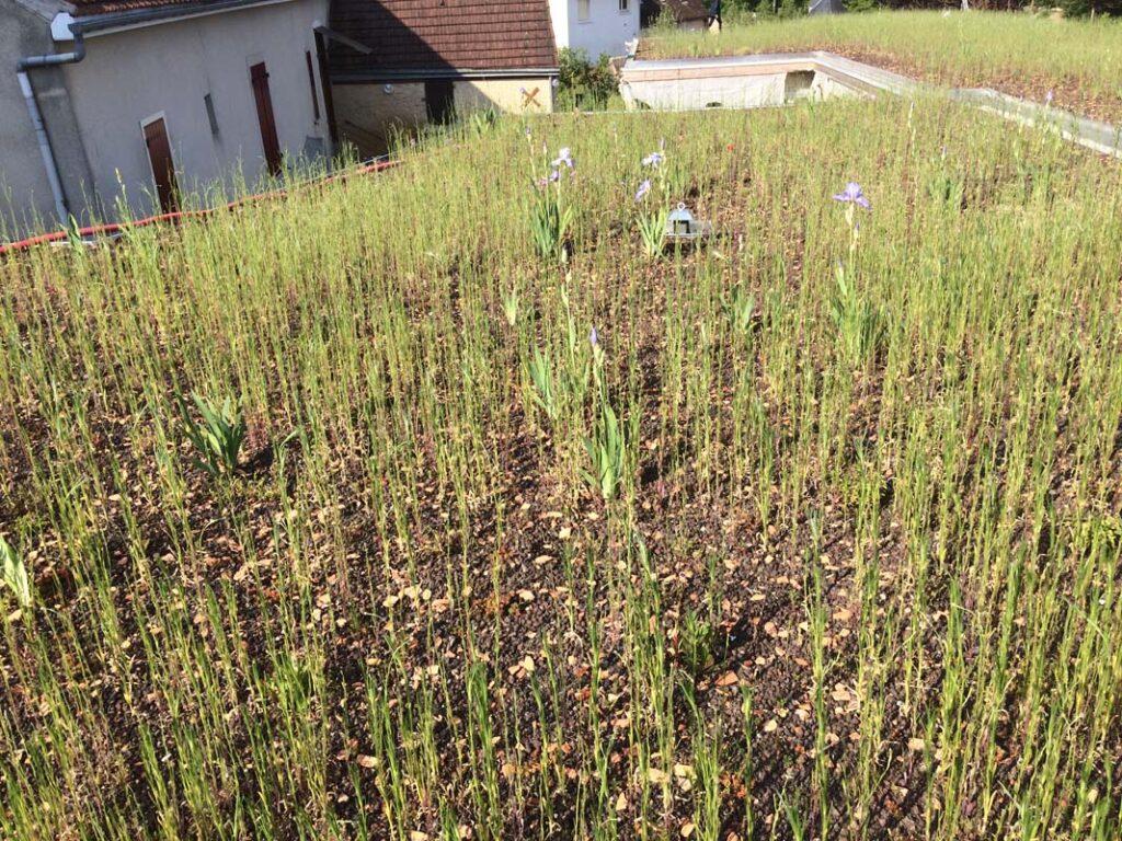 conlie-pole-petite-enfance-etancheite-vegetalisee-cruard-couverture
